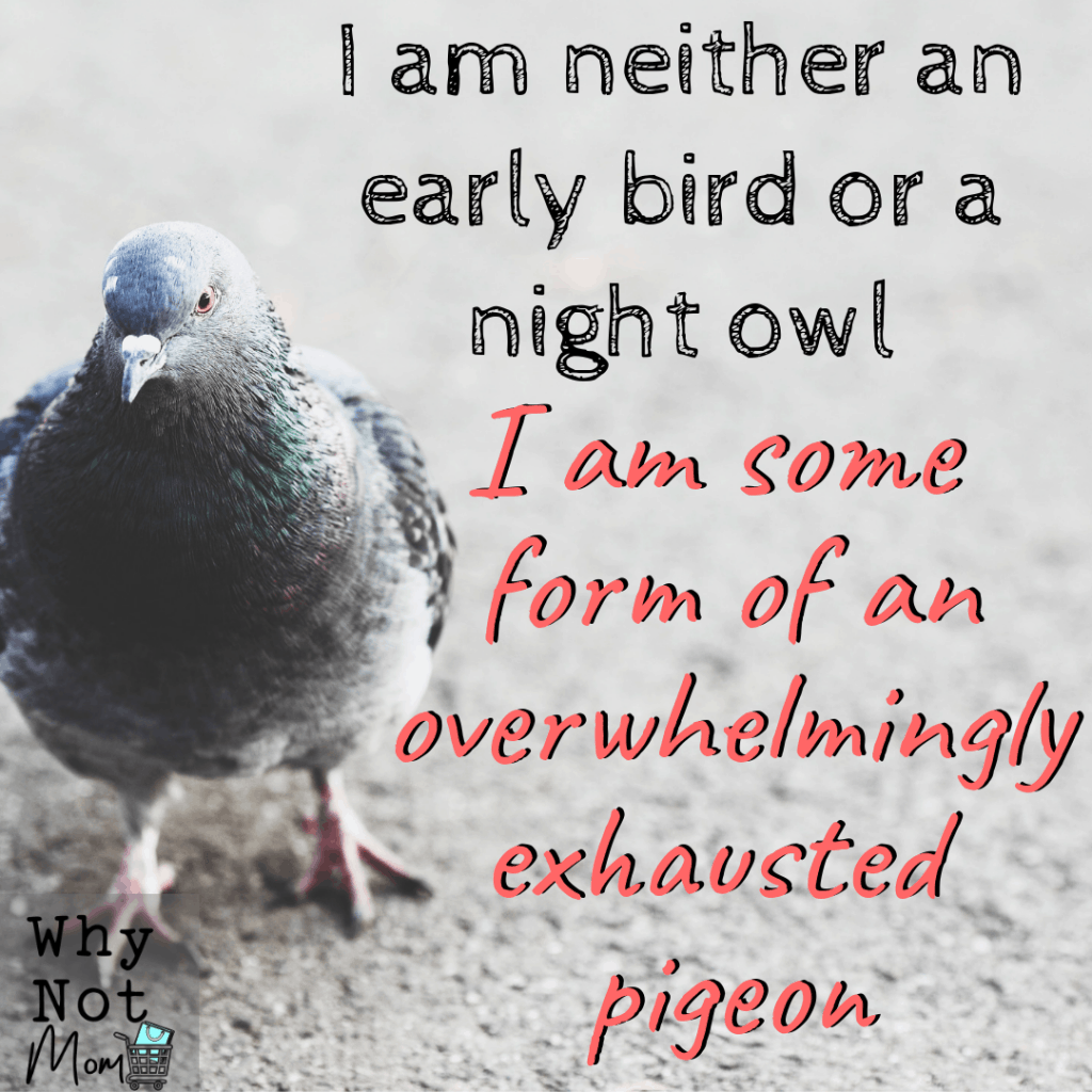 text meme says: I am neither an early bird or a night owl I am some form of an overwhelmingly exhausted pigeon